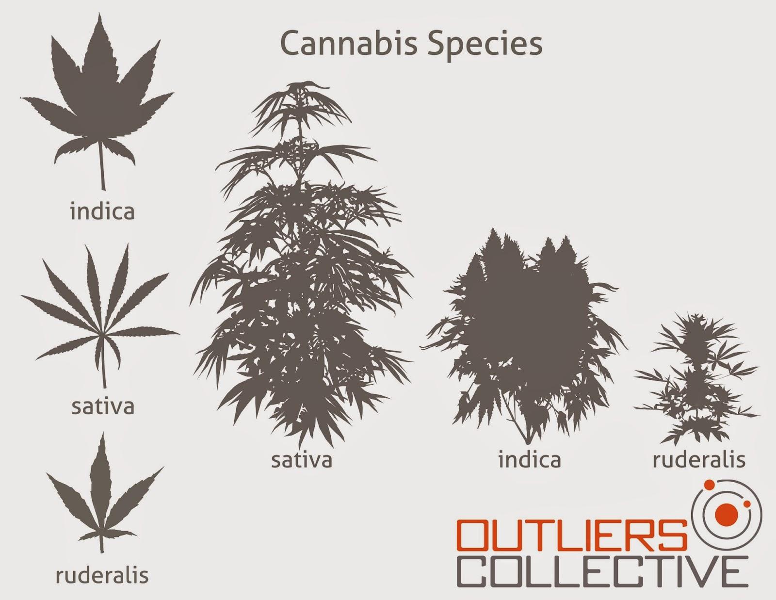 OUTCO Labs | Southern California Medical Marijuana
