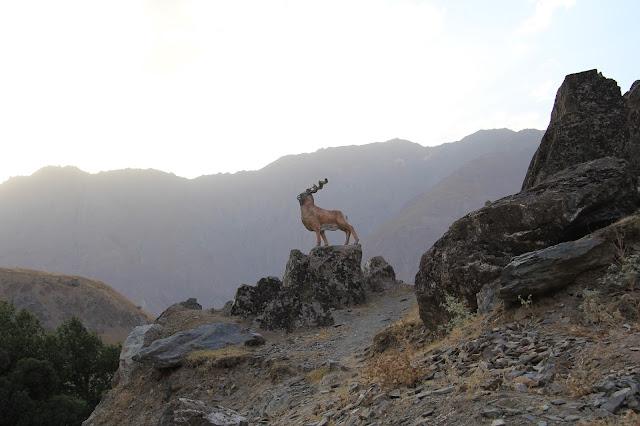 Tadjikistan, Haut-Badakhshan, Pamir, Kalaï Khum, bouquetin, © L. Gigout, 2012