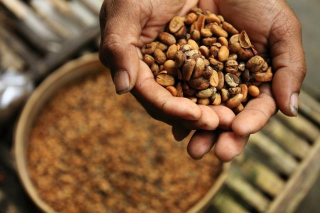 Kopi Luwak Termasuk dalam 6 Makanan Termahal di Dunia