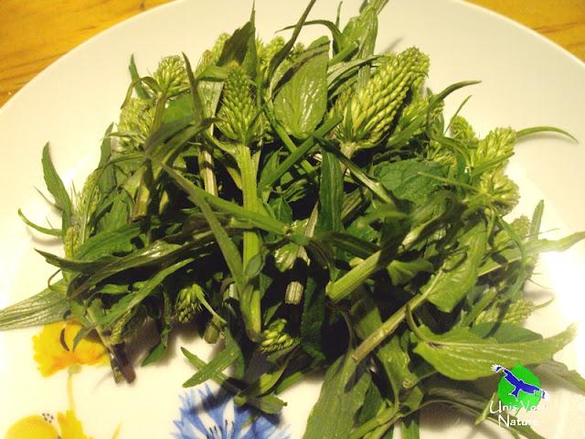 Identifier plantes comestibles, unis vers nature Jura