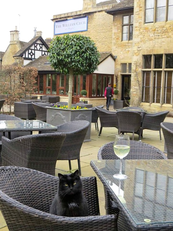 Cecil the cat from The William Cecil Hotel in Stamford