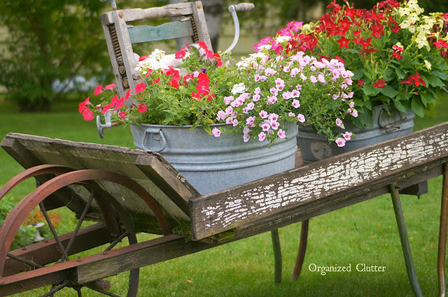 Calibrachoa and Nicotiana in Laundry Tubs organizedclutter.net