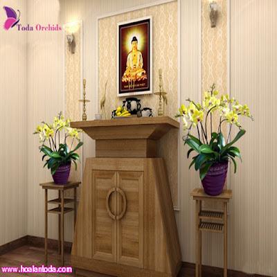 Hoa lan hồ điệp tết chậu 8 cành màu vàng