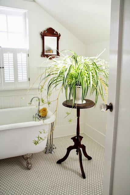 Plantas para el Cuarto de Baño