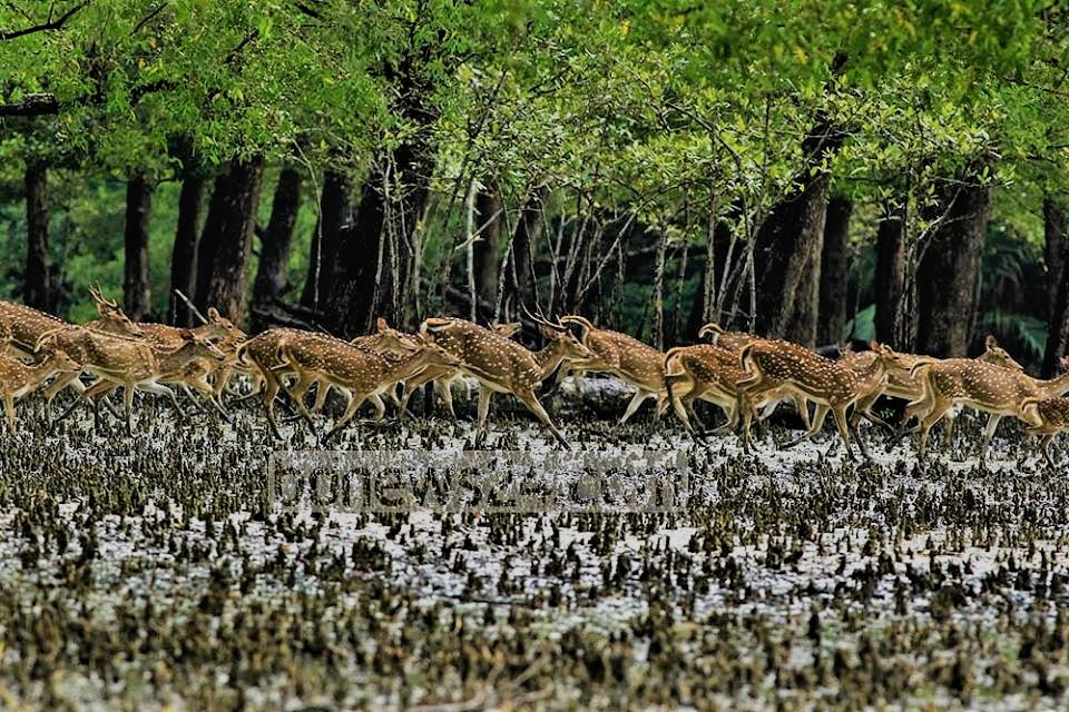 Mangrove forest animals