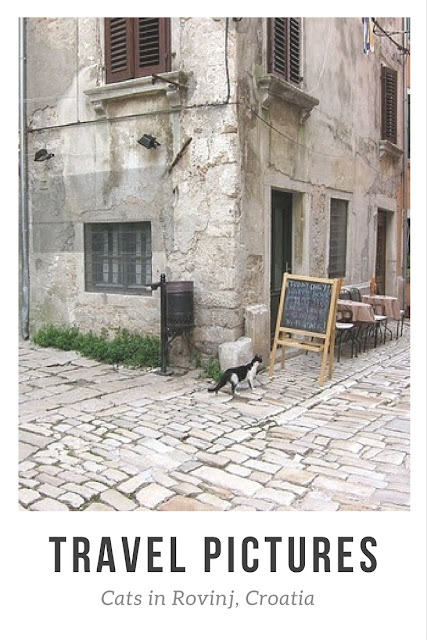 travel pictures cats in rovinj croatia