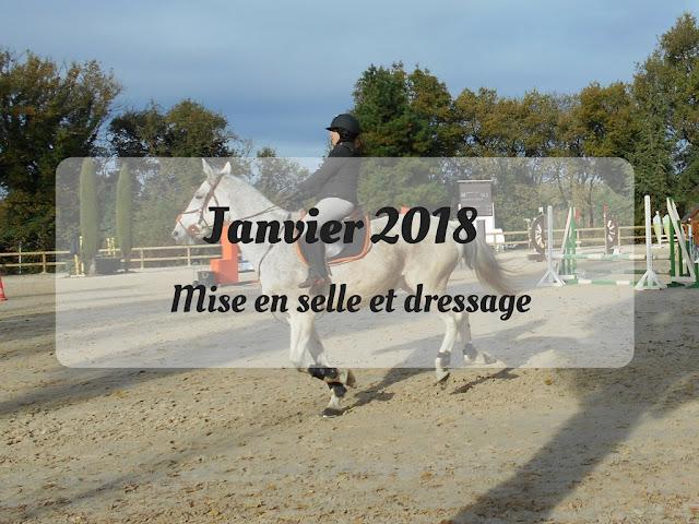 équitation, journal de bord, dressage, mise en selle