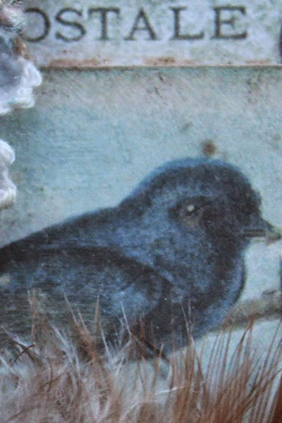 Shabby Wren Close Up 1