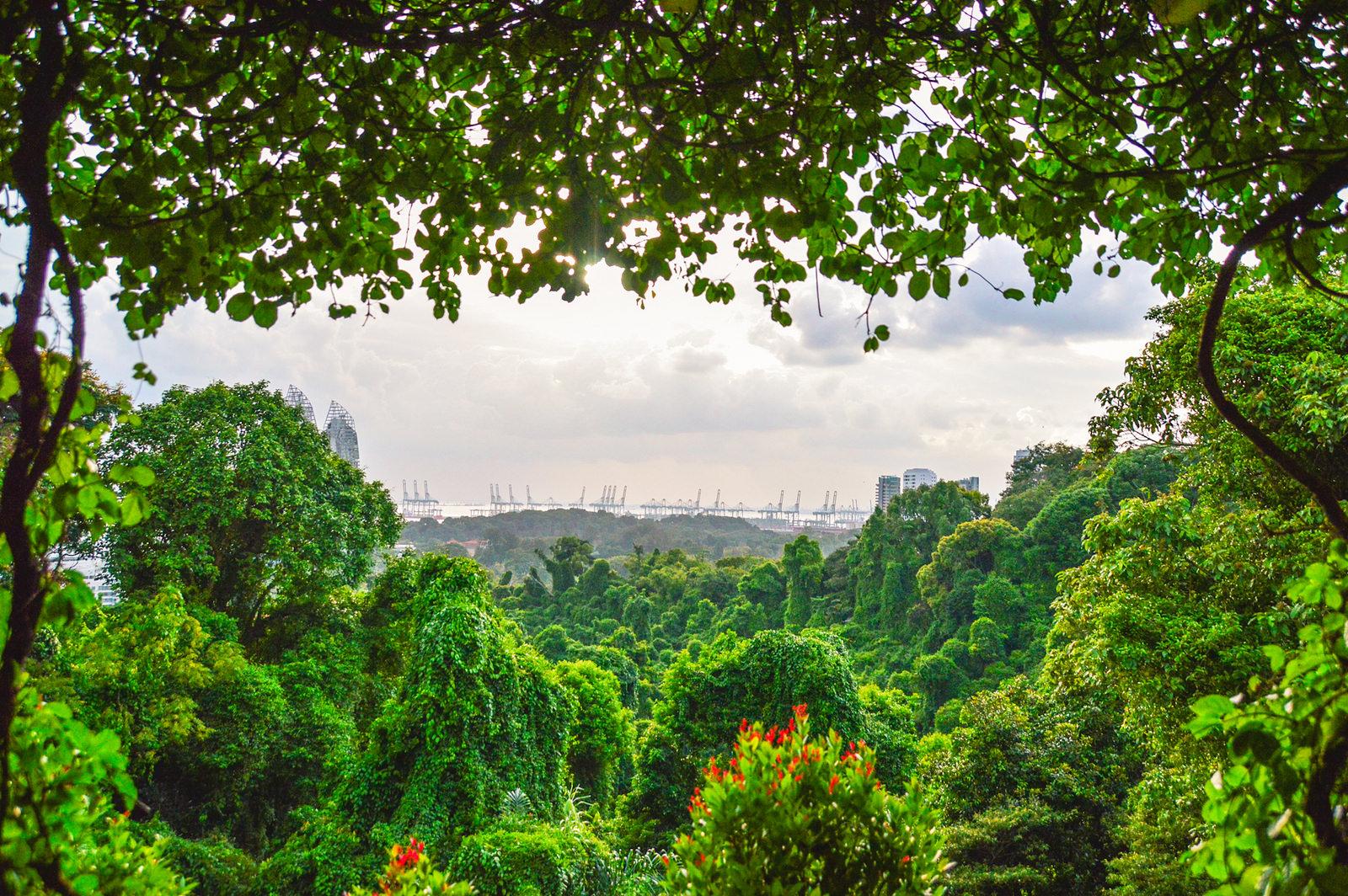 Mount Faber & the Henderson Waves Bridge – Southern Ridges, Singapore