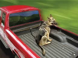 transporte de cães