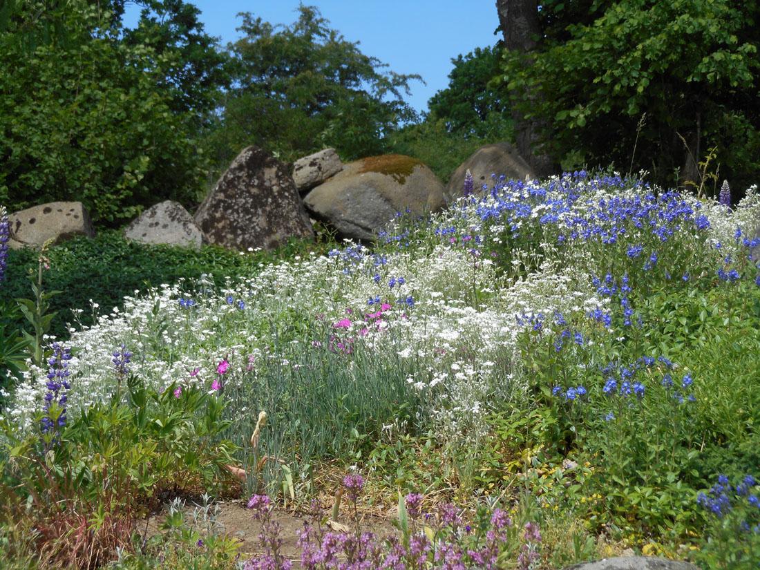 La collina in fiore