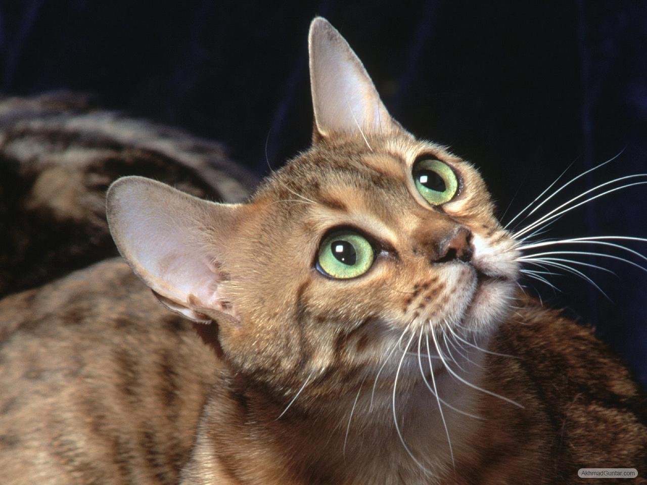 Perawatan Kucing Kucing Imut Dan Lucu