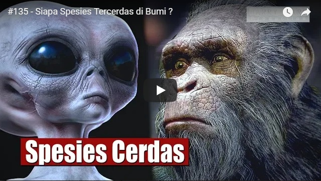 siapa spesies tercerdas di bumi