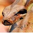 snake close view