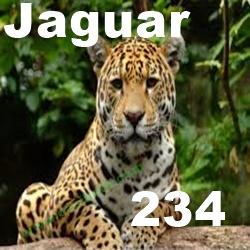 JAGUAR COMO ANIMAL DE PODER