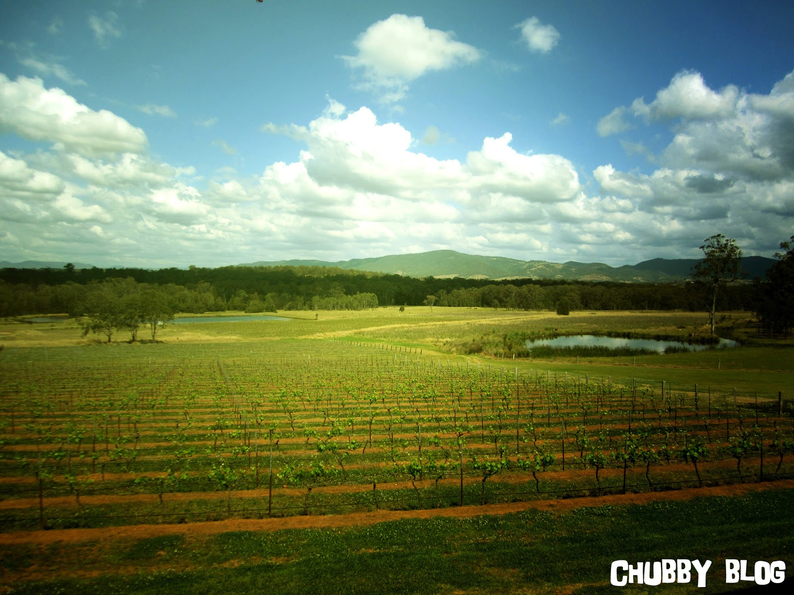 hunter valley from sydney - photo#30