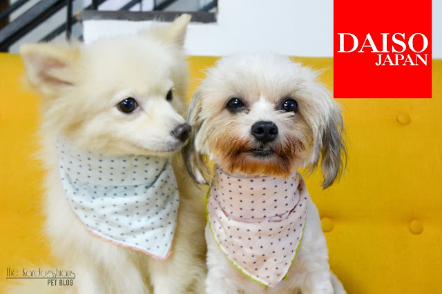 9 Cute Pet Items You Can Get At Daiso Japan