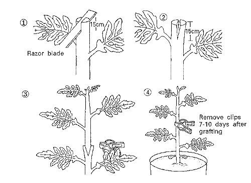 figure 1 schematic diagram