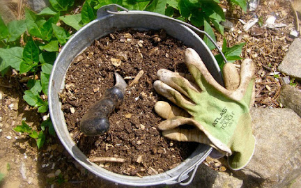 Pot potting soil and gloves