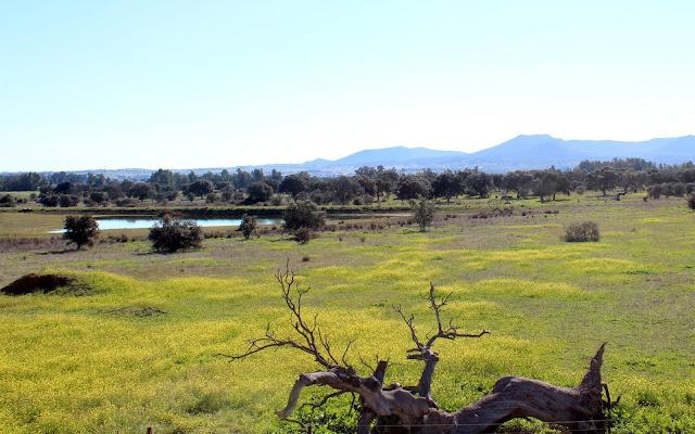 Parque Perirurbano de Conservación y Occio Moheda Alta. Navalvillar de Pela