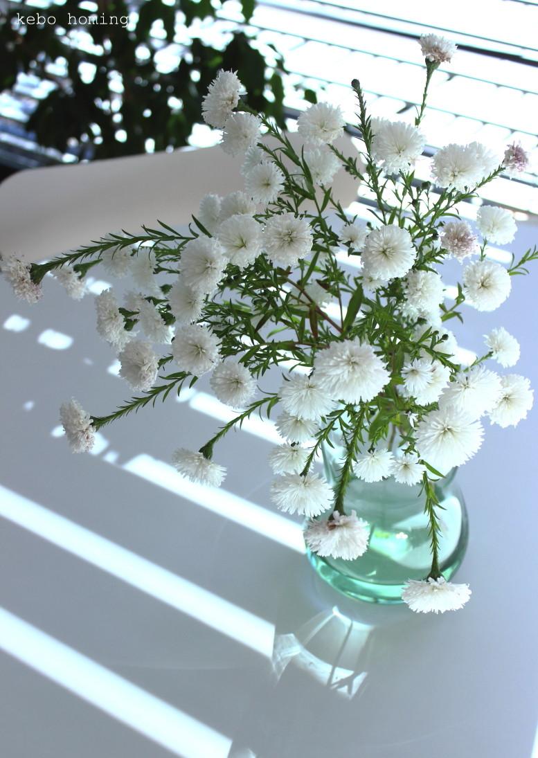 Weiße Blümchen und Schattenspiele, flowers beim Südtiroler Food- und Lifestyleblog kebo homing