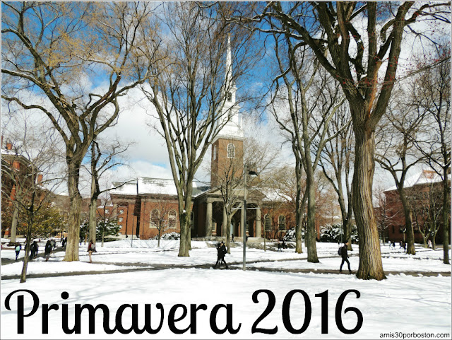 Primavera Universidad Harvard 2016