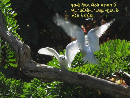वृक्षनो वैभव एटले परखाय छे Gujarati Sher By Naresh K. Dodia