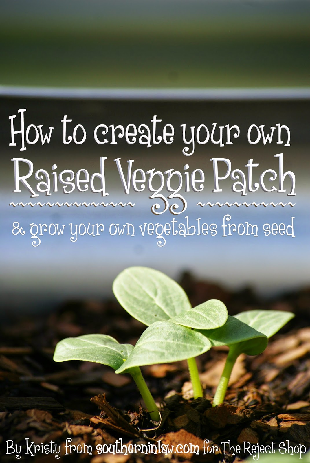 How to Make Your Own Raised Veggie Patch and Grow Your Own Vegetables from Seed