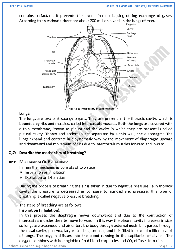 gaseous-exchange-short-question-answers-biology-11th