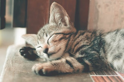 Common Health Problems Of Cats