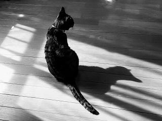 猫モノクロ写真