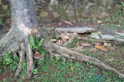 Hindari Menanam Pohon Berbatang Keras Ukuran Besar di Lahan Sempit Dekat Jalan atau Selokan