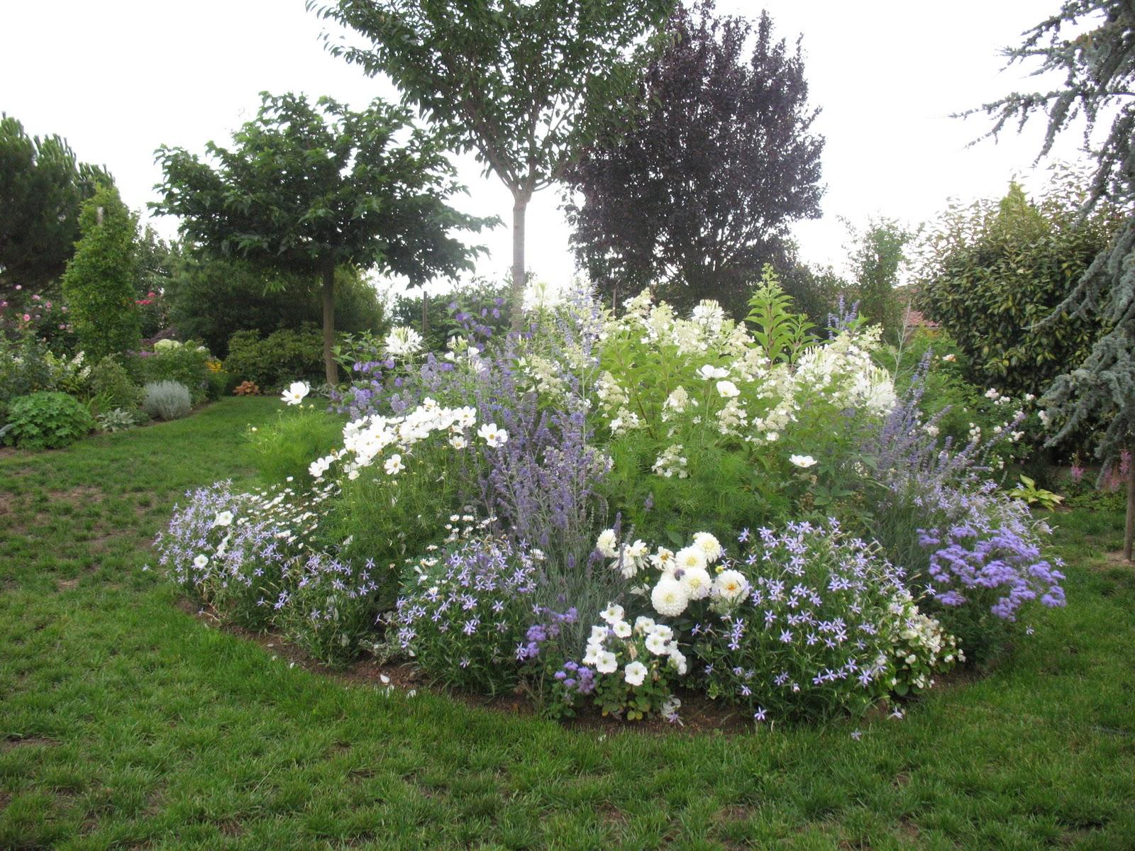 roses du jardin ch neland l 39 volution du jardin. Black Bedroom Furniture Sets. Home Design Ideas