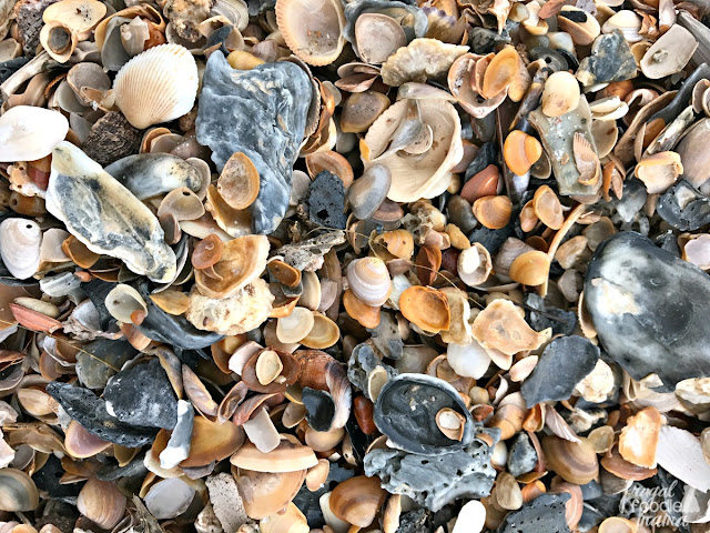If you happen to be into shelling and shark tooth hunting, then Amelia Island's beaches will be an absolute treasure trove for you and your family.