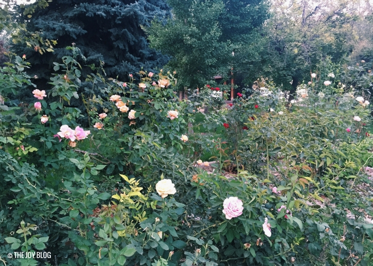 Discovering A Secret Rose Garden // WWW.THEJOYBLOG.NET