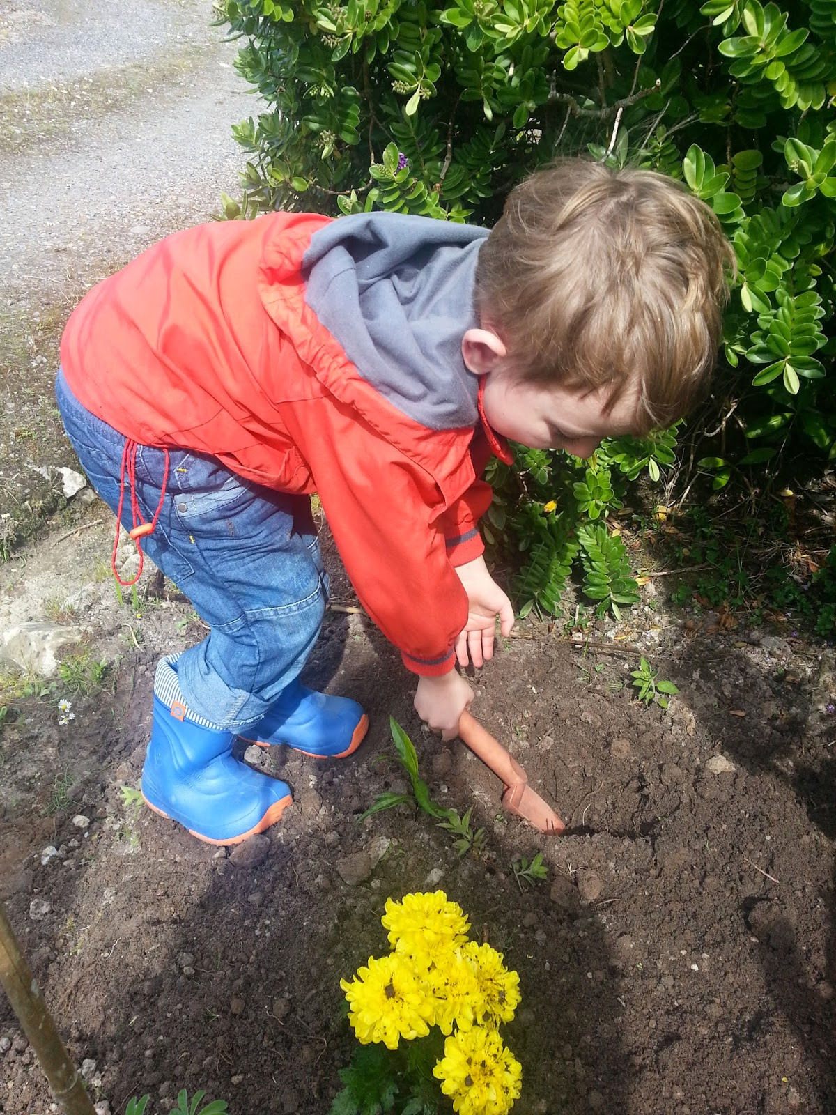 Young boy planting yellow flowers in soil