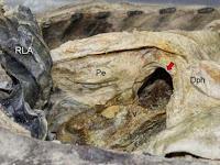 Mumi Korea Didiagnosis Hernia 300 Tahun Kemudian