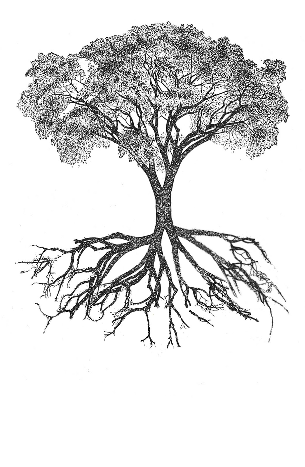 Botany Professor The Root Of The Root Problem