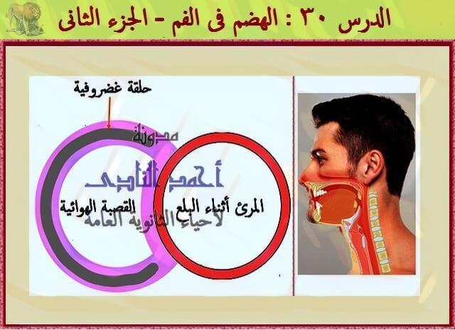 الهضم فى الفم - هضم ميكانيكى ( بالأسنان + اللسان ) - هضم كيميائى ( بالغدد اللعابية ) - مدونة أحمد النادى - احياء الثانوية العامة
