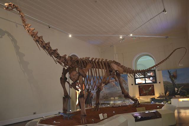 Image Attribute: Replica of the skeleton of Maxakalisaurus Topai dinosaur exhibited at the National Museum of the Federal University of Rio de Janeiro, Quinta da Boa Vista, Rio de Janeiro/ Source: Wikipedia