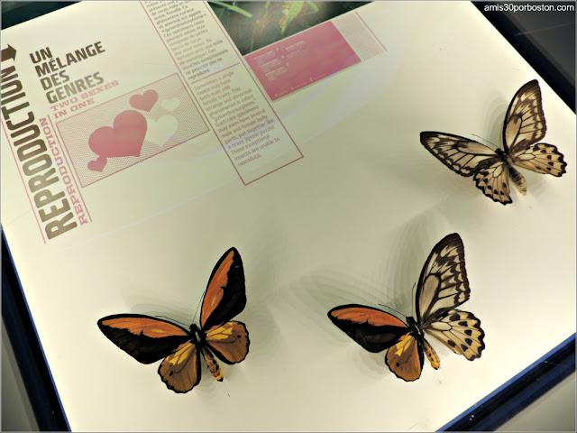 Mariposas en el Insectarium de Montreal