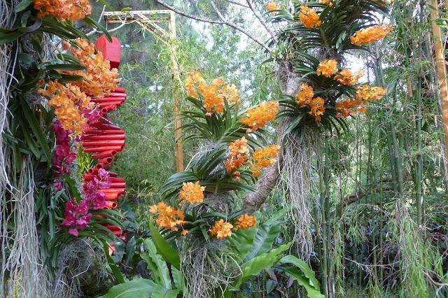 Orchidee w Singapurze