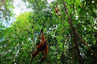 Bukit Lawang, North Sumatera3