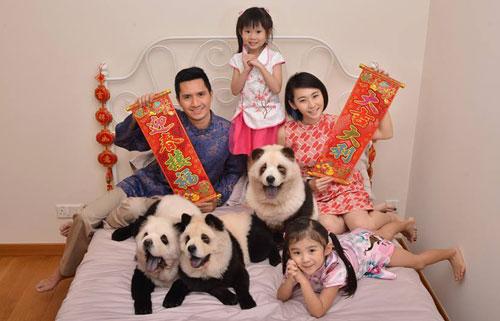 anjing berbulu panda