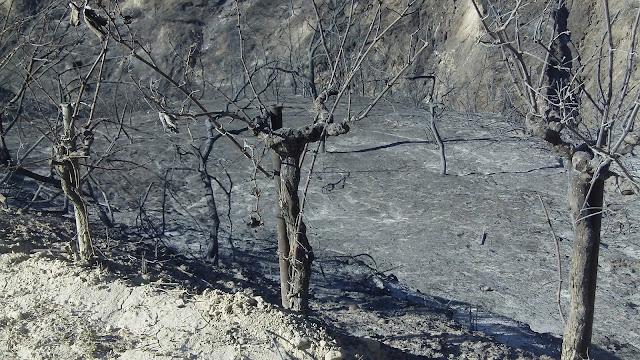 Πολίτης της Νεμέας καταγγέλλει την Πυροσβεστική Υπηρεσία Κορίνθου για ολιγωρία και έλλειψη συντονισμού