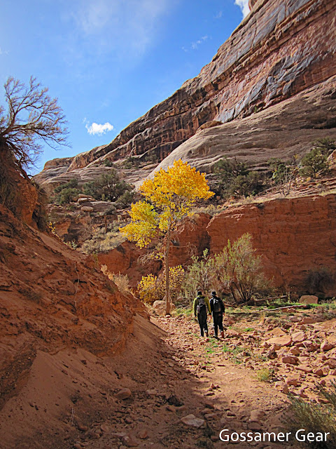 grand gulch autumn