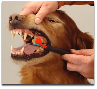 pet care dogs