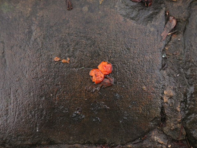 Squashed berries on broken wet pavement.
