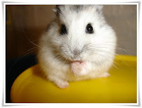 Hamster Animal Pictures