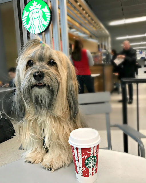 Dogs at Starbucks